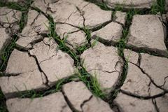 Grass breaks through the drought cracks Royalty Free Stock Images