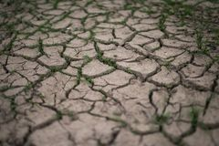 Grass breaks through the drought cracks Royalty Free Stock Image