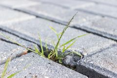 Grass breaks through granite tiles Stock Image