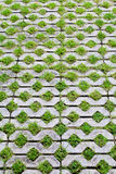 Grass brick Royalty Free Stock Photo
