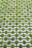Grass brick Royalty Free Stock Photo