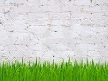 Grass and brick wall Royalty Free Stock Photos
