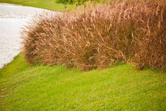 The grass is brown Royalty Free Stock Photos