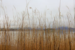 Grass Brown with the lake Stock Photography