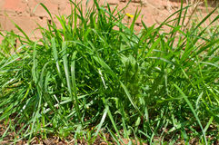 Grass on brown sand Stock Images
