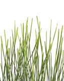Grass bunch Royalty Free Stock Images