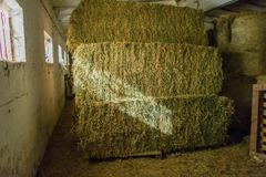 Grass bundles stacked in interior with light rays royalty free stock photo