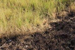 Grass after burning Royalty Free Stock Photos