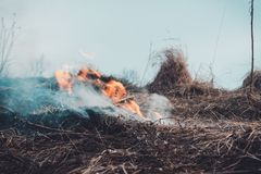 The grass is burning, the fire of which destroys everything in its path royalty free stock photos