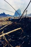 The grass is burning, the fire of which destroys everything in its path royalty free stock photography