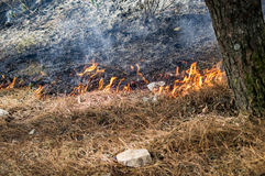 Grass burning with wildfire Stock Photo