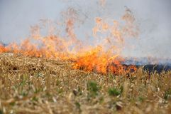 The grass burns. In the steppe royalty free stock photography