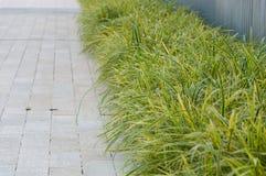 Grass bush along path Stock Photos