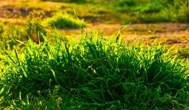 Grass bush backlit by setting sun royalty free stock photo