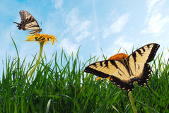 Grass with butterflies Stock Photos