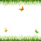 Grass with butterflies and ladybugs on white background Stock Photography