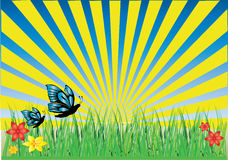 Grass butterflies yellow ray Royalty Free Stock Photography