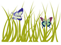 Grass with butterfly Stock Photography