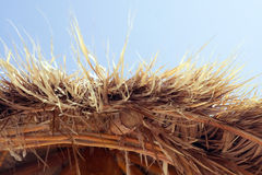 Grass Cabana. Roof of a grass Cabana along the beach in Mexico Royalty Free Stock Photo