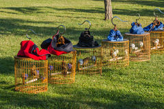 The grass of the cage. The grass in the park arranged in a row of bird cage, near the park like birds of the retired old people took the cage to the park every Stock Images