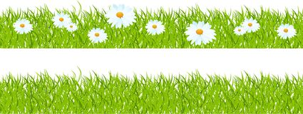 Grass and camomiles. Seamless horizontal mount, grass with camomiles. Vector illustration Royalty Free Stock Photos