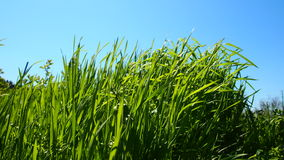 Grass. Camping Royalty Free Stock Images