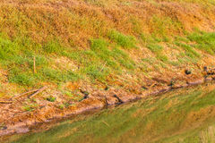 Grass canal water reflection Royalty Free Stock Photos