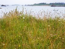 Grass on cape on coast of English Channel. Travel in France - green grass on cape on coast of Gouffre gulf of English Channel near Plougrescant town of the Cotes Royalty Free Stock Photos