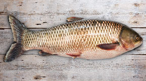 Grass carp. Fish on old wooden background Stock Images