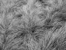 Grass, carpet, dog. What is this grass carpet or dog? Look good and you`ll know stock photos