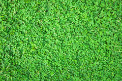 Grass carpet Royalty Free Stock Photography
