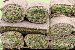 Grass carpet Stock Images