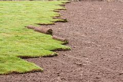 Grass carpet Royalty Free Stock Photo