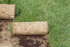 Grass Carpet Rolls Royalty Free Stock Photography
