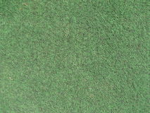 Grass carpet texture Royalty Free Stock Photography