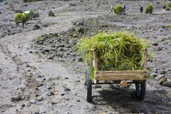 Grass Carts at Mount Merapi, Indonesia Stock Images