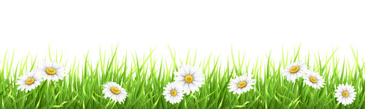 Grass and chamomile Stock Photos