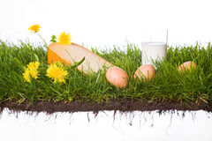 Grass with cheese milk and eggs stock photography