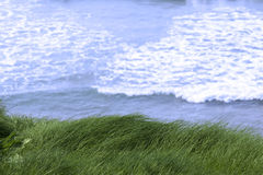 Grass on the cliff edge Stock Photo