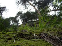 Grass on a cliff in the forest in the Carpat royalty free stock photography