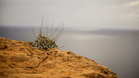 Grass on a cliff. With view from the Mediterranean Sea Stock Photo