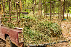 Grass clippings. A stack of grass to feed the dry season Stock Photography