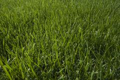 Grass close-up Royalty Free Stock Images