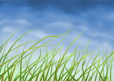 Grass close-up. (other landscapes are in my gallery Stock Image
