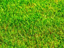 Grass close up Stock Photography