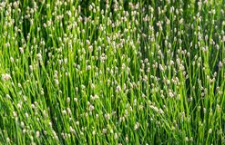 Grass close-up in a counter-light as background Stock Photo