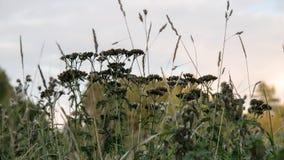 Grass close-up. Evening grass close-up view Stock Image