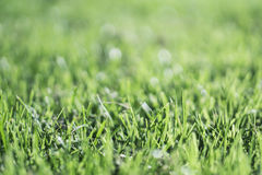 Grass Close up. Close up of green summer grass blades using a shallow depth of field Stock Image
