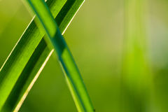 Grass. Close up Stock Photography