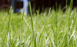 Grass. Close up image of green grass Royalty Free Stock Image